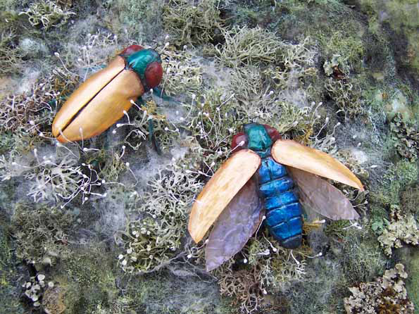 Illustrating symbiosis between beetles and plants, Chelsea Flower Show 2005 (Institute of Horticulture/Eden Project) .
