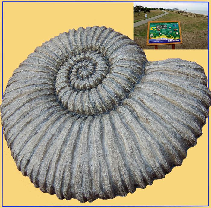 Pakefield ammonite
