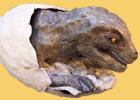 Dinosaur chick